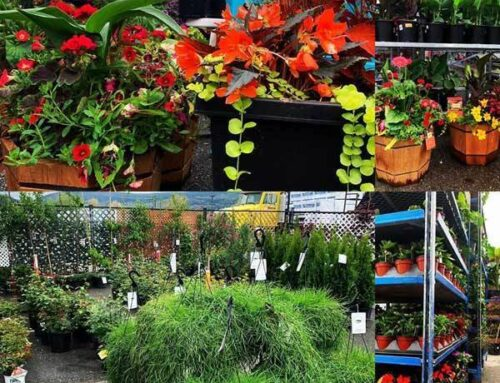Annuals, Flowers, Plants, Vegetables in Olds